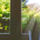 Photograph of a sunny windowsill looking out into a backyard with a potted plant in the foreground